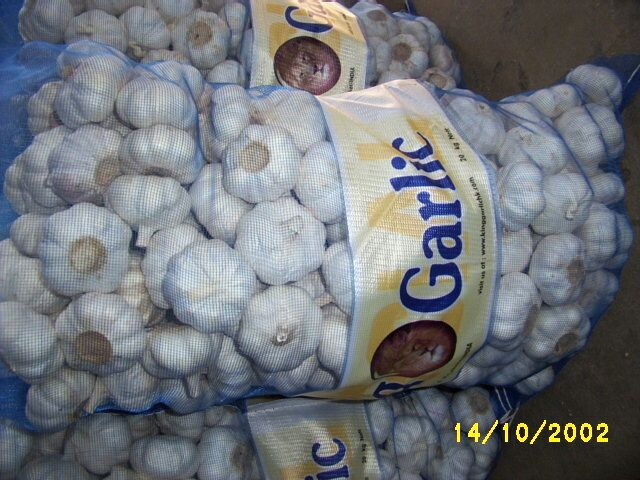 Garlic In Sacks