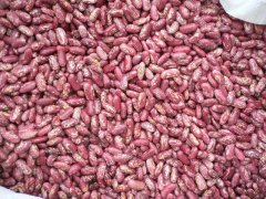 Red Speckled Kidney Beans (Cherry Red Color)