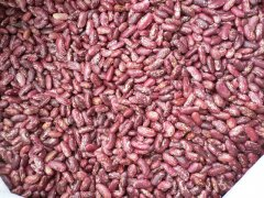 Red Speckled Kidney Beans (Light Purple Red Color)