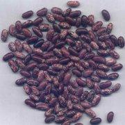 Purple Speckled Kidney Beans (Dark Purple Color)